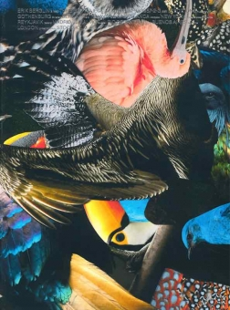 BERGLIN, Erik - The Bird Project, 2006-2017